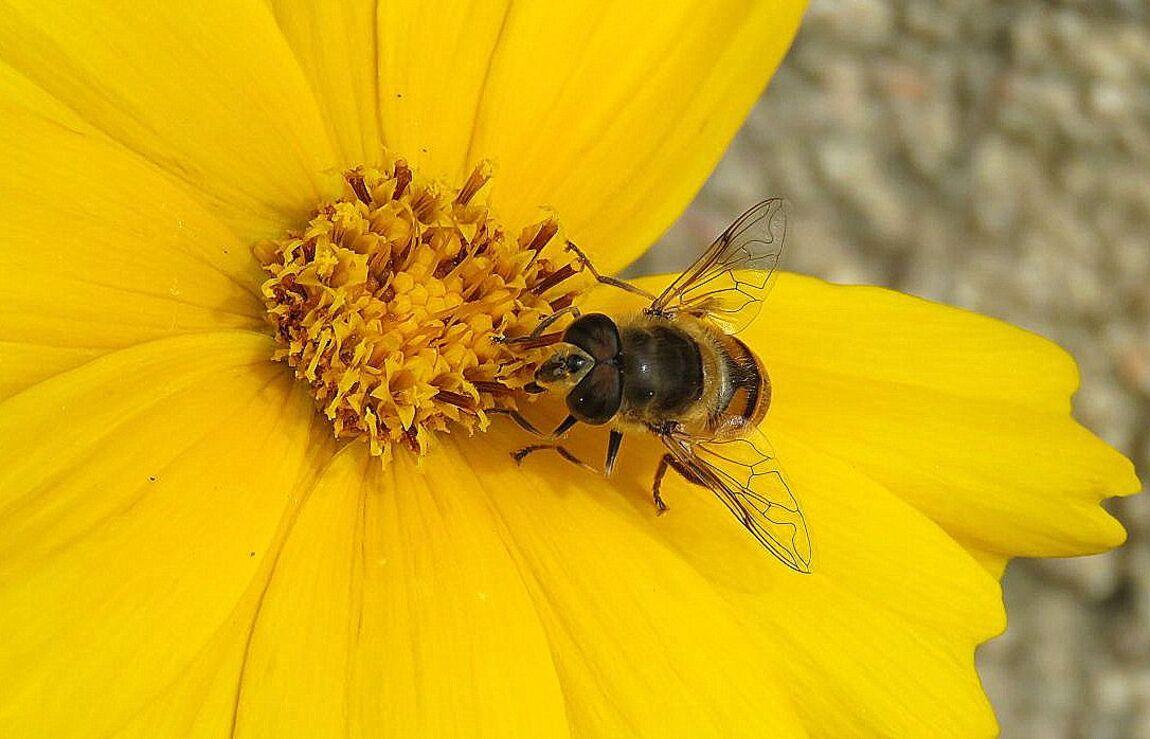 une fleur jaune et ...