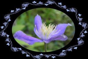 Jardiner avec la lune du 1er au 15 juillet