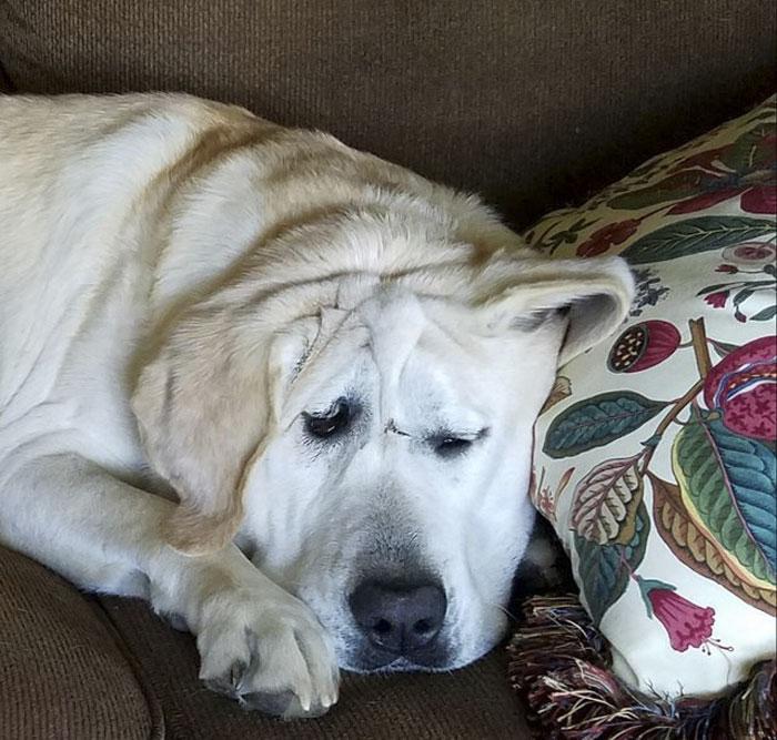 Ce chien abandonné à cause de son visage « laid »