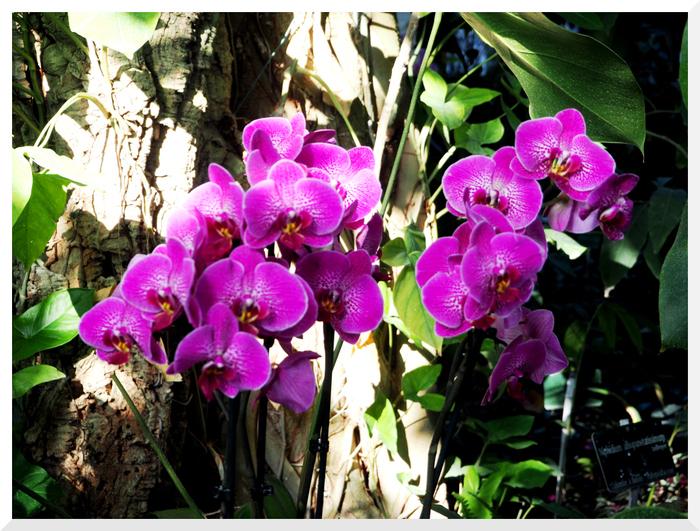 Mille & Une Orchidées. 2018