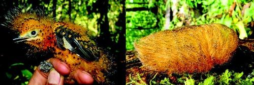 Mimétisme et camouflage