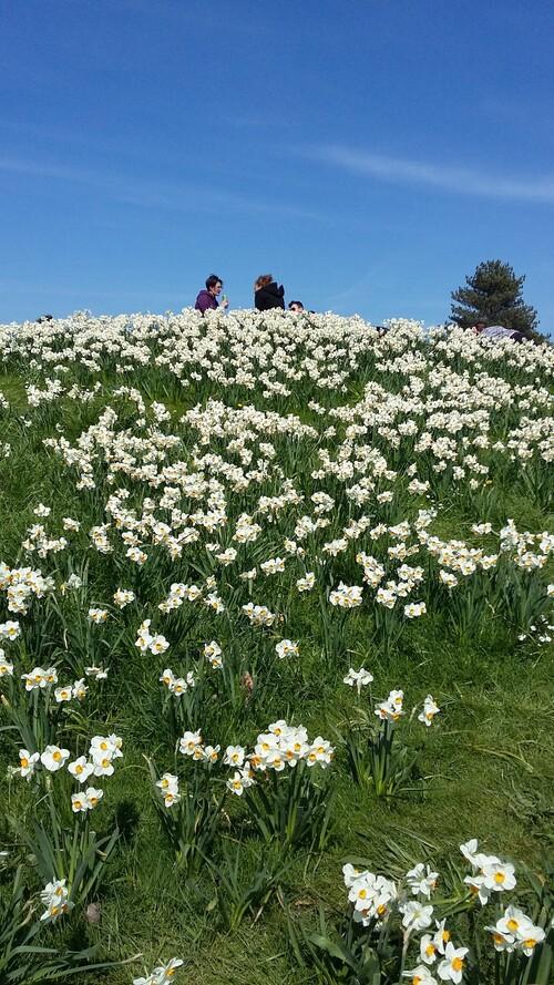 parc floral -