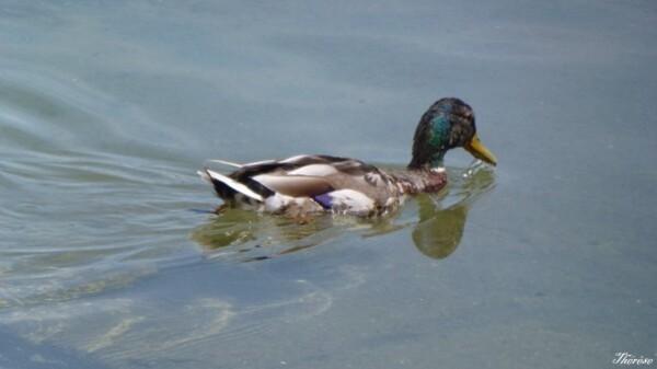 Yvoire, faune et flore lac léman (17)