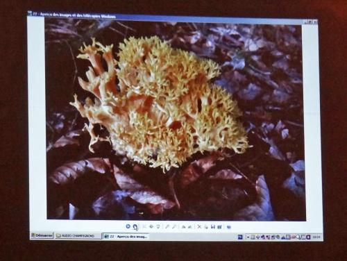 Comestiblité et toxicité des champignons  et empoisonnements célèbres au cours de l'histoire...