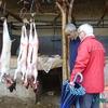 douar gzoula - souk - pat au rayon boucherie - carcasses de chèvres tamponnées