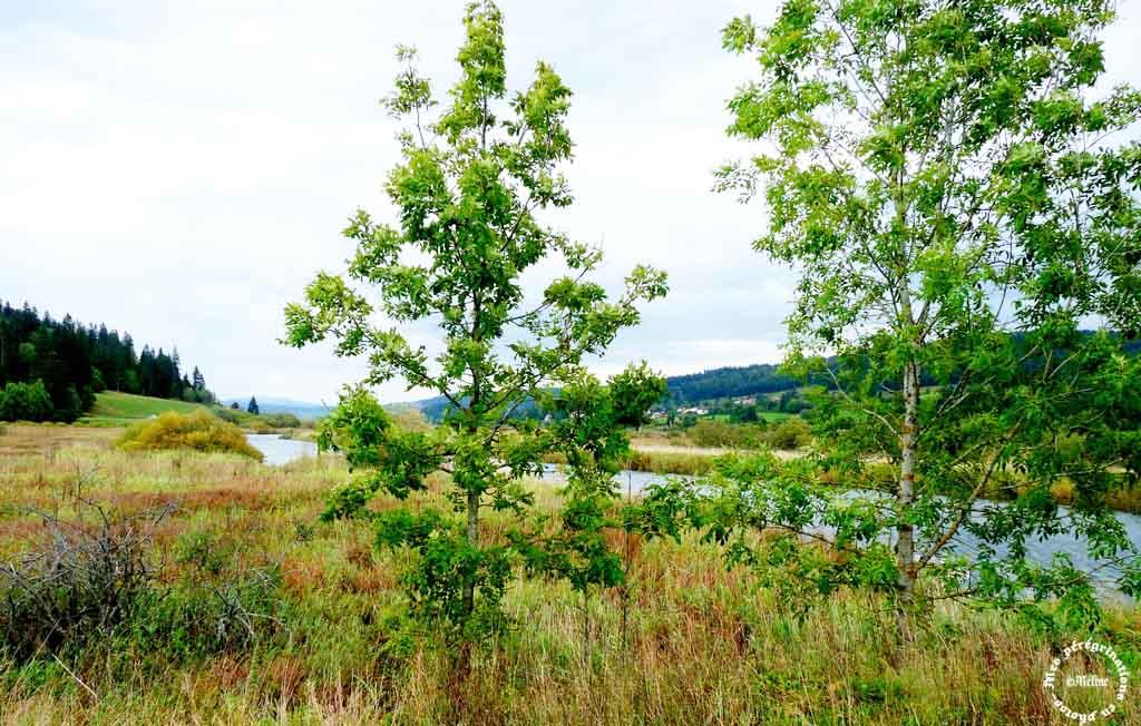Le Haut Doubs (5)