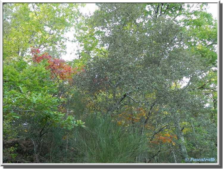 branches feuilles rouges et jaunes