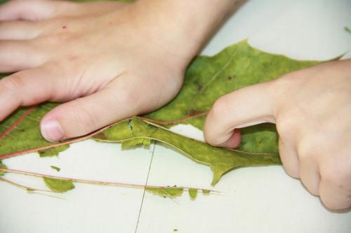 Des feuilles toiles d'araignées pour Haloween...