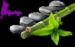 Virágok .png tubek