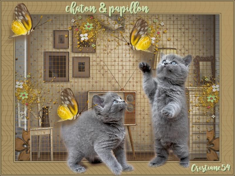 Défi  chaton &  papillon pour mon amie Beauty !!