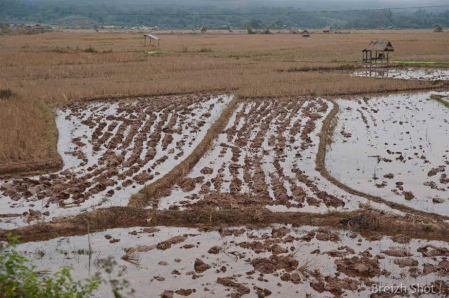 Mise sous eau de la rizière