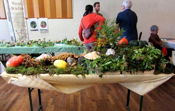 360 espèces de champignons différentes ont été déterminées et exposées à Arc en Barroy par la Société Mycologique du Châtillonnais !!