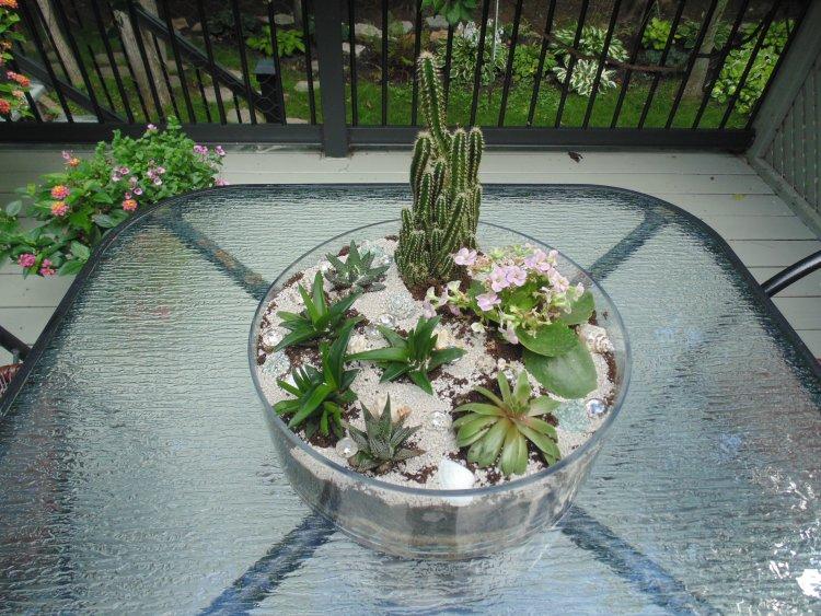 Le terrarium que j'ai fait hier