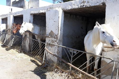 Voilà les chevaux