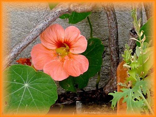 fleurs-vacances--2-.jpg