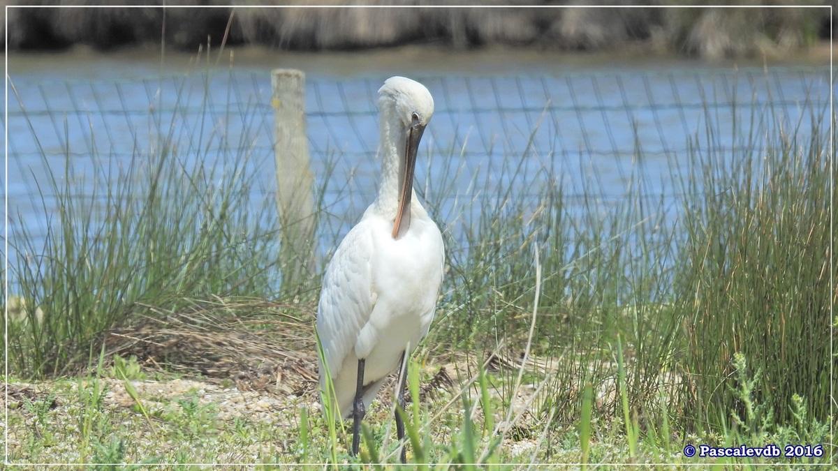 Printemps à la Réserve ornitho du Teich - Avril 2016 - 7/12