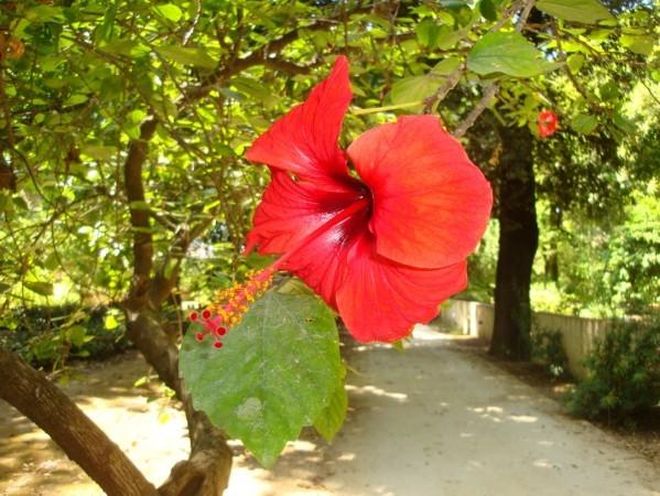 Palerme, Jardin botanique, 7