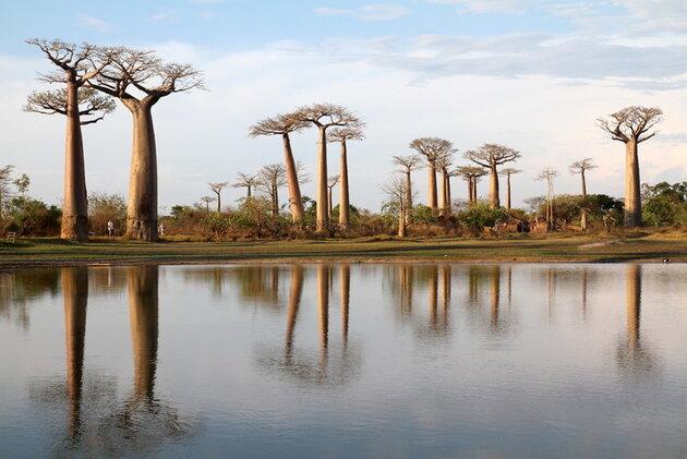 L'allée des baobabs, Madagascar