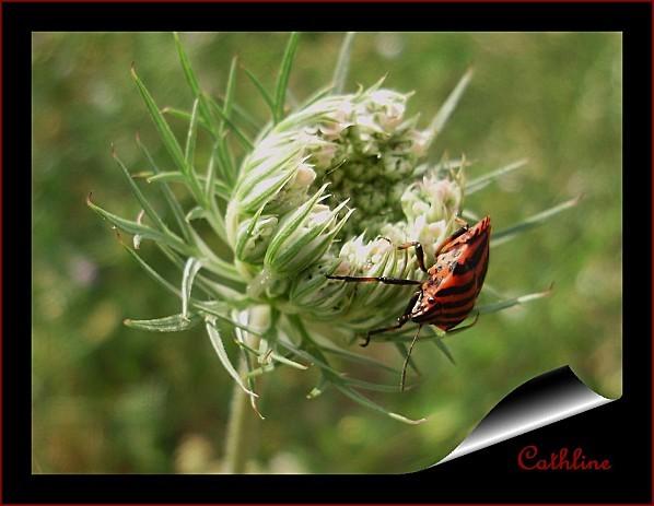 arlequin-et-fleur-de-carotte-4.jpg