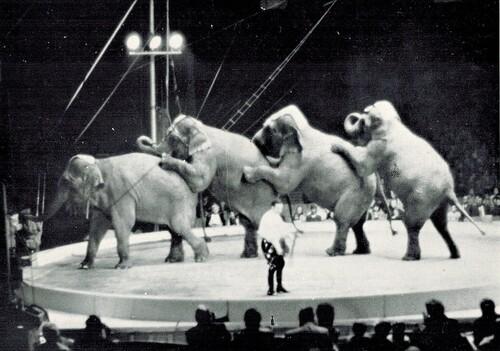 les éléphants du cirque Jean Richard