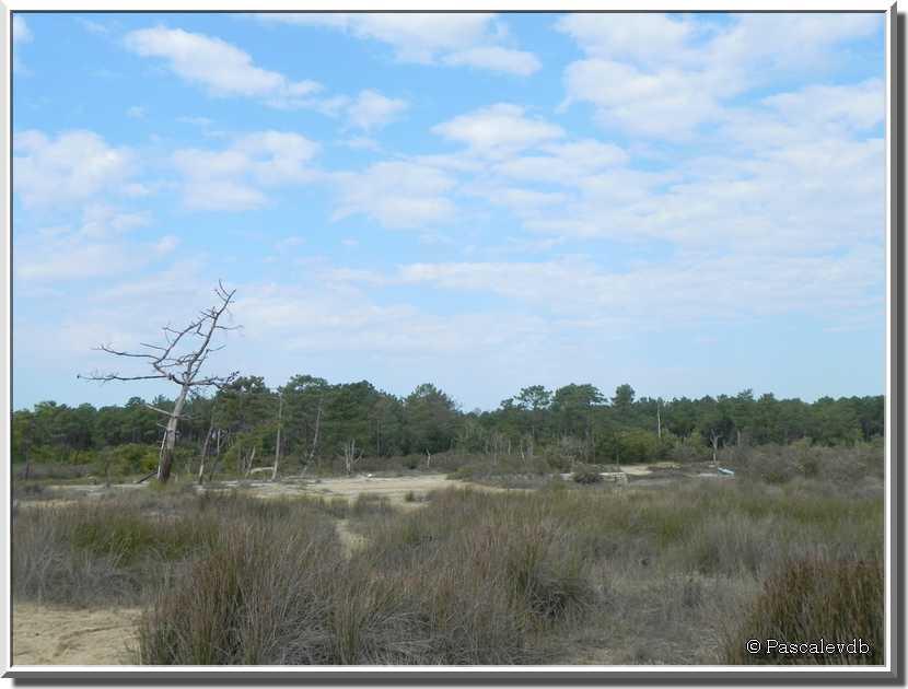La réserve naturelle des prés salés d'Arès