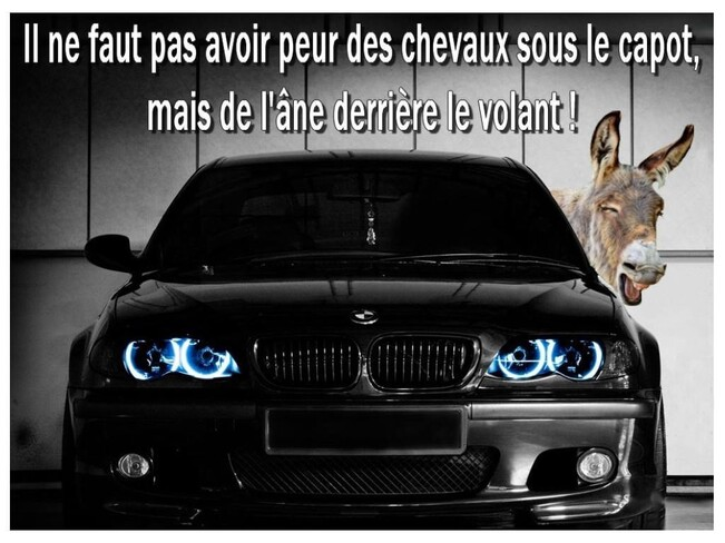 Chevaux Et Ane
