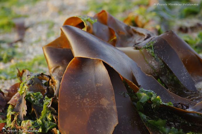 Graphisme des algues