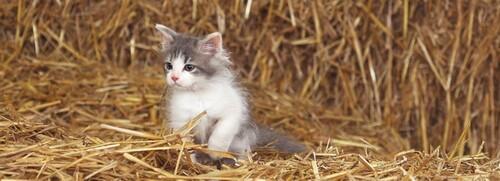 Trois petits chats Grandeurs Nature
