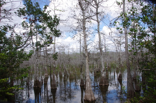 Des plages de Floride aux bayous de Louisiane