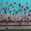 Roses 5.jpg