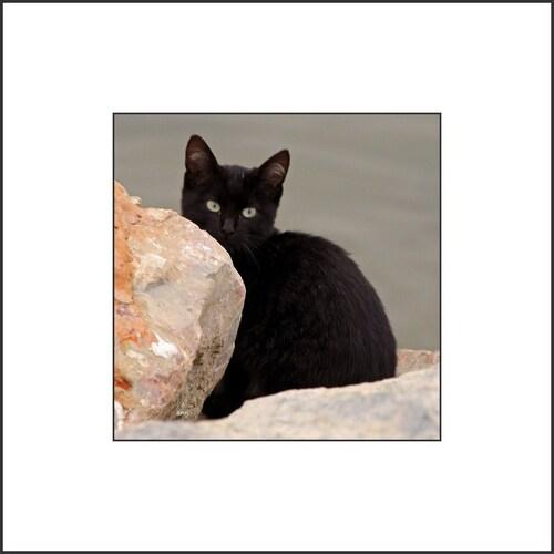 Les chats sauvages du Barcares