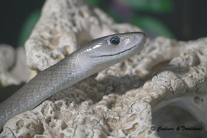 Quelques reptiles