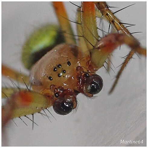 Arachnides-04-6252.jpg