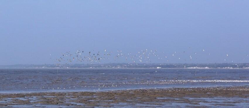 Les oiseaux au Port du Collet Les Moutiers en Retz