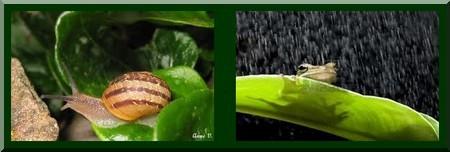 Sous-la-pluie-7.jpg