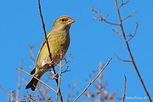Oiseaux 02 3542a