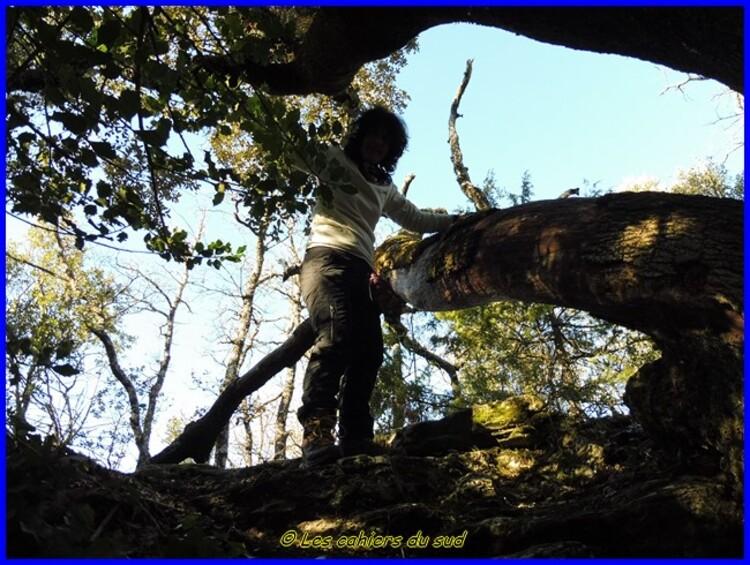 Var, la forêt des Morières