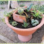 Une jardinière de plantes grasses