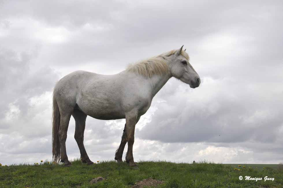 Beauté des chevaux