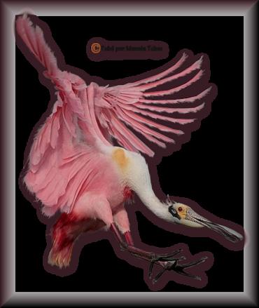 Tube d'oiseau 2970