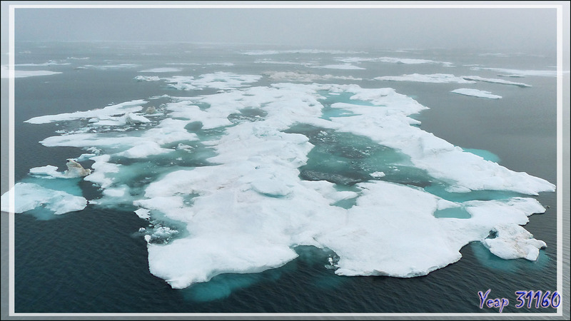 L'après-midi, la recherche des Morses, Walrus (Odobenus rosmarus) reprend en bordure de la banquise, et vers 15 heures, bingo ! - Mer des Tchouktches - Alaska