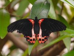 Le Papillon ce petit bout de bonheur