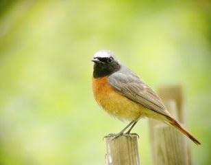 L'oiseau mystérieux ...