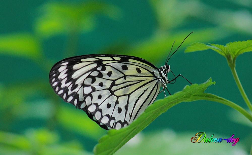 """ile aux papillons à Noirmoutier """"suite"""""""