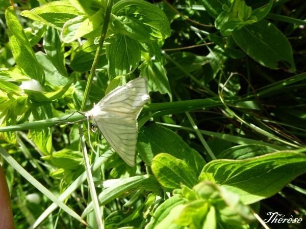 papillons--5-.JPG