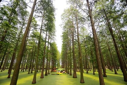 Forêts aquatiques en Chine ...