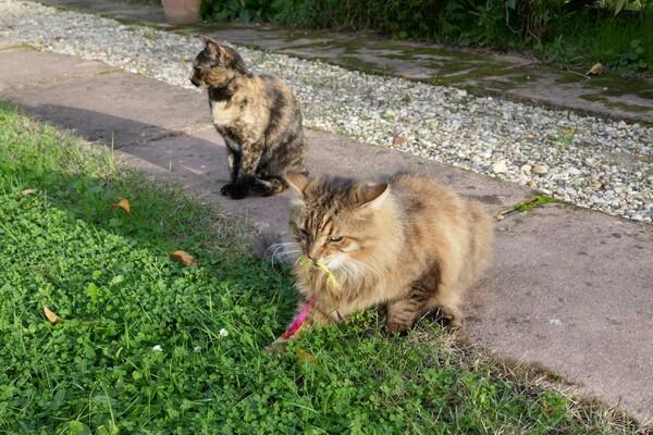 Mitsouko, Réglisse et mes plumes