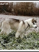 Ourka (4 mois)