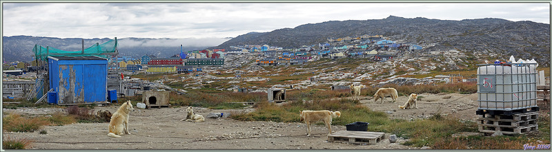 Vues sur les hauteurs d'Ilulissat et ses chiens de traîneaux - Baie de Disko - Groenland