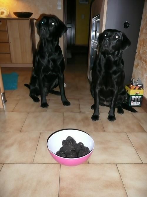 les-2-noirs--truffes.jpg